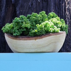 Jarmuż Dwarf Green Curled-Brassica oleracea convar. acephala var. sabellica