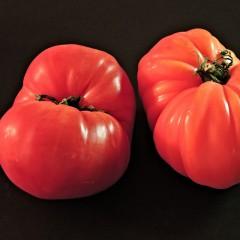 Pomidor Malinowy Ożarowski-Solanum lycopersicum
