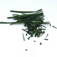 Szczypiorek-Allium schoenoprasum