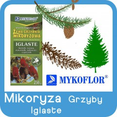 Mikoryza GRZYBY Drzew Iglastych-