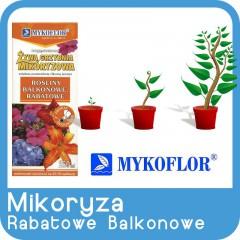 Mikoryza Rośliny Balkonowe i Rabatowe-