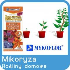 Mikoryza Rośliny Domowe Doniczkowe-