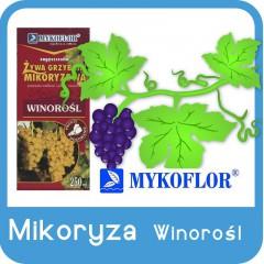 Mikoryza Winorośl-