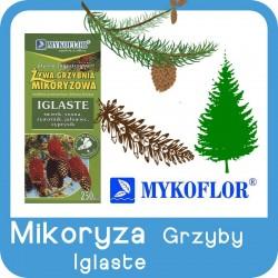 Mikoryza GRZYBY Drzew Iglastych