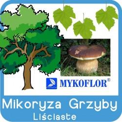 Mikoryza GRZYBY Drzew Liściastych