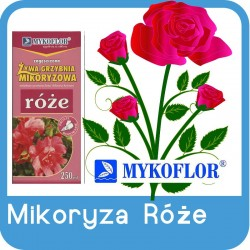 Mikoryza Róże