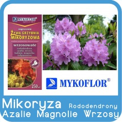Mikoryza Rododendrony, Azalie, Wrzosy, Magnolie
